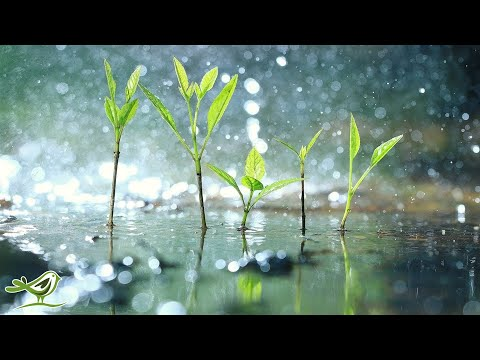 Relaxing Piano Music with Tropical Rain Sounds for Sleep, Work or Meditation • 'Raindrops'