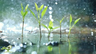 Relaxing Piano Music With Tropical Rain Sounds For