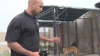 Cali K9® - Outdoor Dog Kennels - Bay Area Dog Training - Dog Training Videos