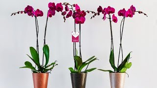 орхидеи уход размножение видео