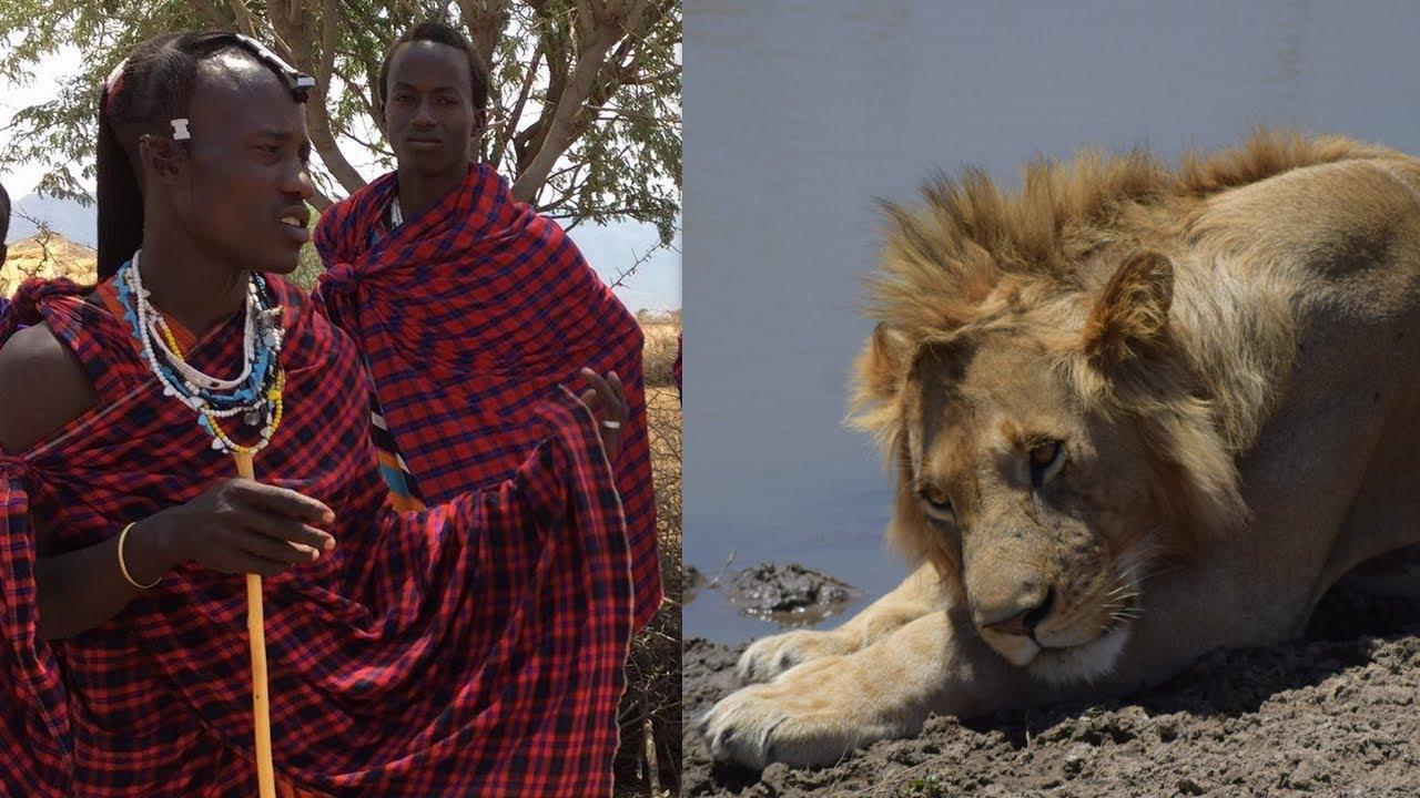 Maasai Y Leones Youtube