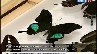 Выставка редких насекомых открылась в отделе краеведческого музея в Иркутске
