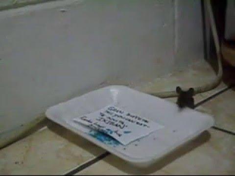 Dra bel n moro veneno para ratas doovi - El mejor veneno para ratones ...