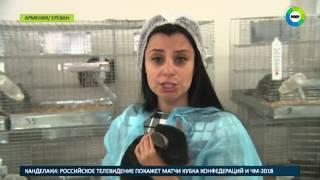 «Пушистый» бизнес: в Армении процветает разведение шиншилл