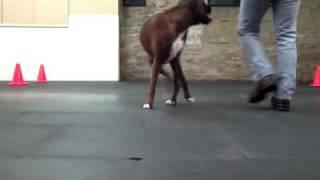 Nigel And I  Practicing Some Canine Freestyle Moves - Chicago Dog Training