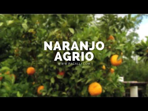 El Naranjo Agrio