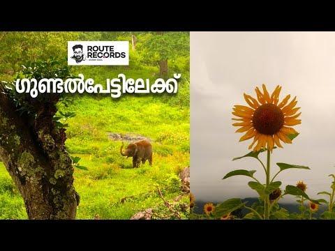 ഗുണ്ടൽപേട്ടിലേക്ക് │ Sunflower And Vegetables │Muthumalai And Bandipur │Route Records Ep#85