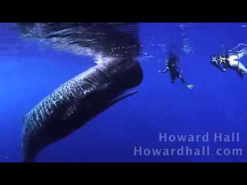 Howard Hall - sperm whale encounter
