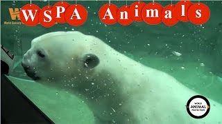 Animal kingdom theme park ⊰ ⊱ Protection of rare animals ⊰ ⊱ Where do polar bears live