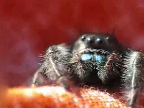 Разнообразие пауков.flv
