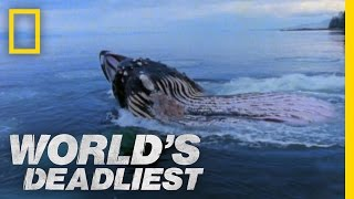 Giant Jaws of Death | World's Deadliest