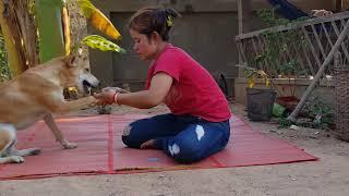 Mum Feeding Dog At Home