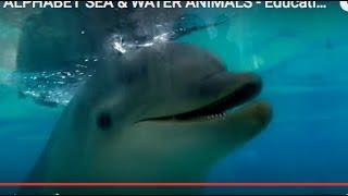 ALPHABET SEA & WATER ANIMALS - Educational Children Video