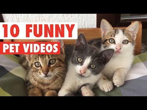 Hilarious Pet Video Countdown Compilation