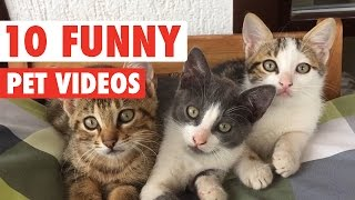 Hilarious Pet Video Countdown Compilation