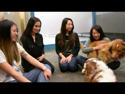Research Shows That Therapy Dogs Can Help Students During Finals