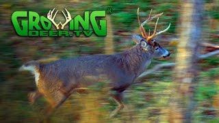 November Bucks in Rut: Deer Hunting Action 2015