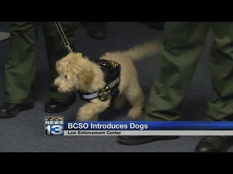 Bernalillo County Sheriff's Office welcomes two furry additions