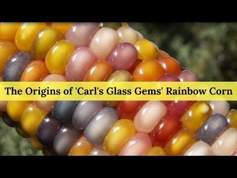 The Origins Of Carl S Glass Gems Rainbow Corn Youtube