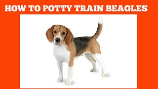 How To Quickly House Train Beagles