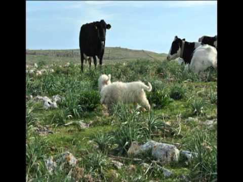 Gargano – immagini di vita pastorale