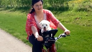 Trying Out The New Buddyrider Bicycle Pet Seats!