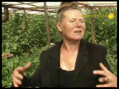 Желтеют листья томатов в теплице что делать