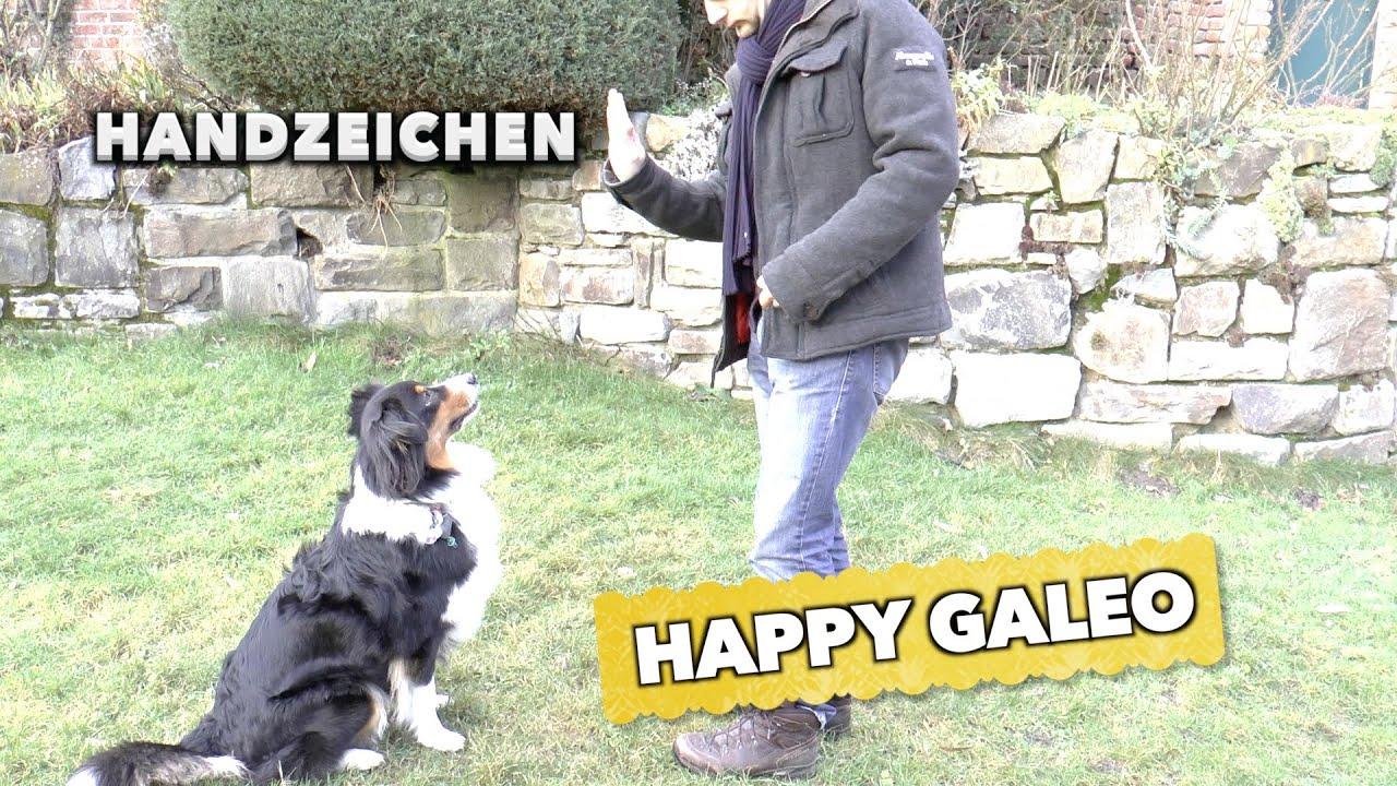 Hunde Gesten