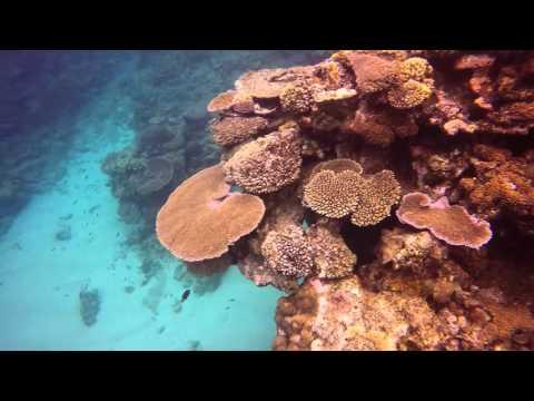 Reef Snorkeling at Fiji Octopus Resort