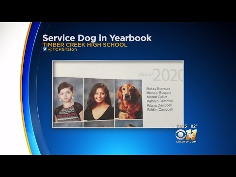 Service Dog Makes High School Yearbook In Keller