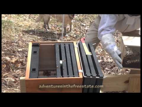 adventures in the apiary: the inception