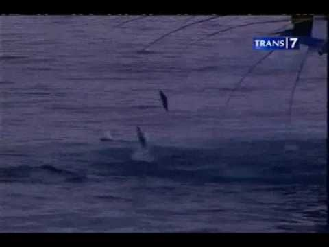 Flying fish cakalang youtube for Where do flying fish live