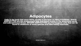 Medical vocabulary: What does Adipocytes mean
