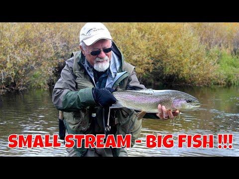 Small Stream Trout | Colorado