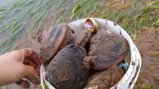 沙滩钓鱼:铲开泥沙,沙洞下果然有好东西