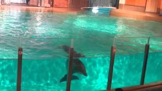 Särkänniemen delfinaariossa delfiini-näytöksessä 2.9.2012