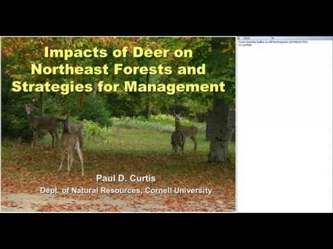 Impacts of deer on northeastern forests and strategies for control