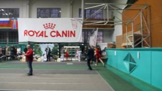 БИС Армавир выставка собак
