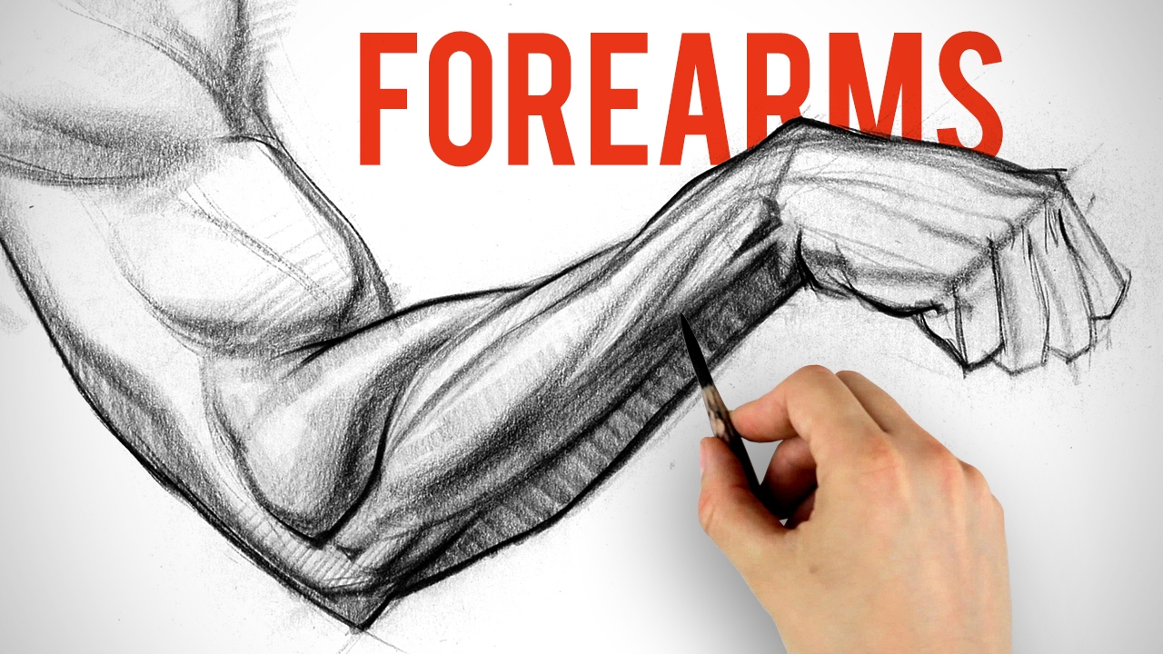 Drawing and Shading Forearms - Arm Anatomy Demo - YouTube
