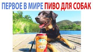 Лучшие Мемы Дня. Пиво для собак и Вейп против КОВИДЛЫ