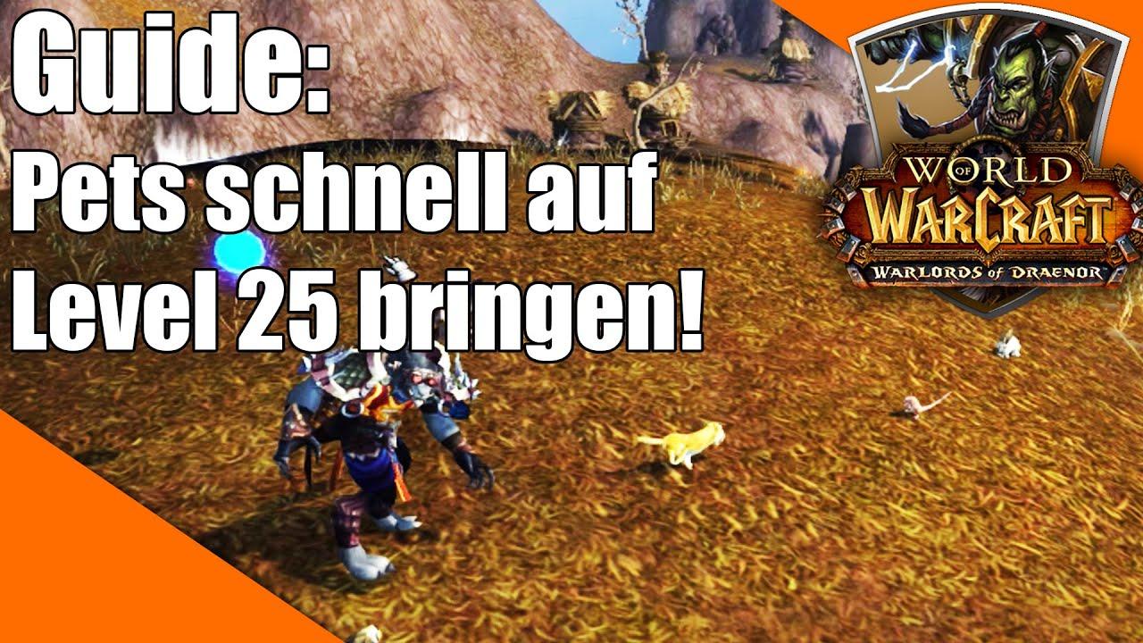 Haustiere Schnell Von 1 25 Powerleveln World Of Warcraft Warlords Of Draenor Pet Guide Youtube