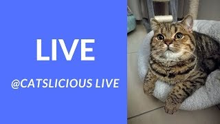 LIVE: Cute Cats with Relaxing Music - Pudding & Dumpling @ CatsLiciousLive