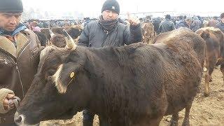 Скотный рынок Узген 29.01.18
