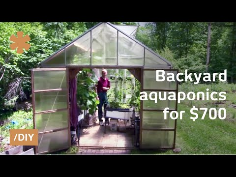 Backyard Aquaponics: DIY System To Farm Fish With Vegetables