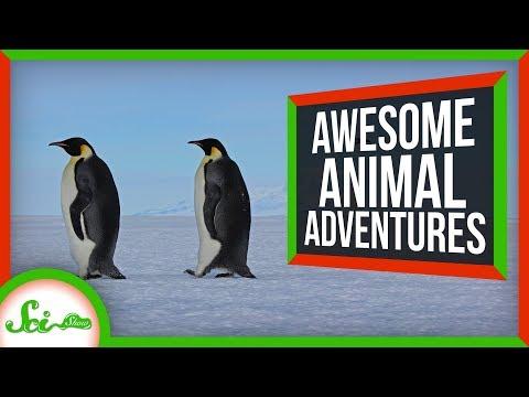 6 Seriously Impressive Animal Migrations