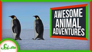 6-seriously-impressive-animal-migrations