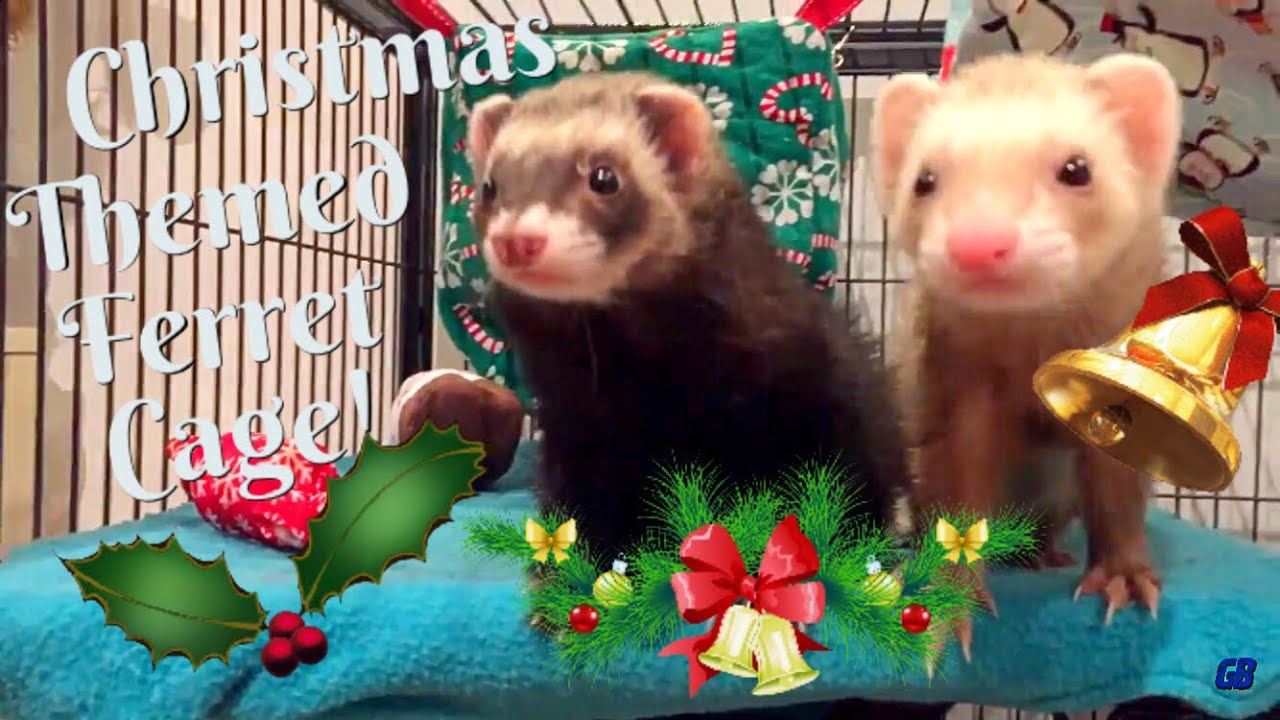 Christmas Ferret.Christmas Themed Ferret Cage Tour December 2017