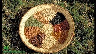 Raději rostlinné bílkoviny