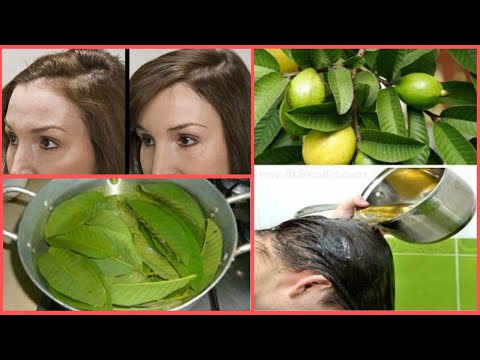 Only in 15 days Guava Leaves Prevent Hair Loss & Encourage Hair Growth | Easy Hair Fall Treatment