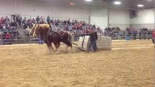 Orangeville, Horses Pull 18000 lbs (2013)